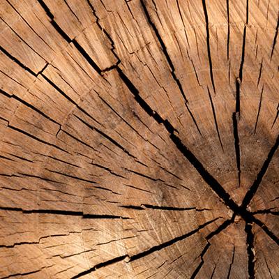 plug-tunnel-legno-online